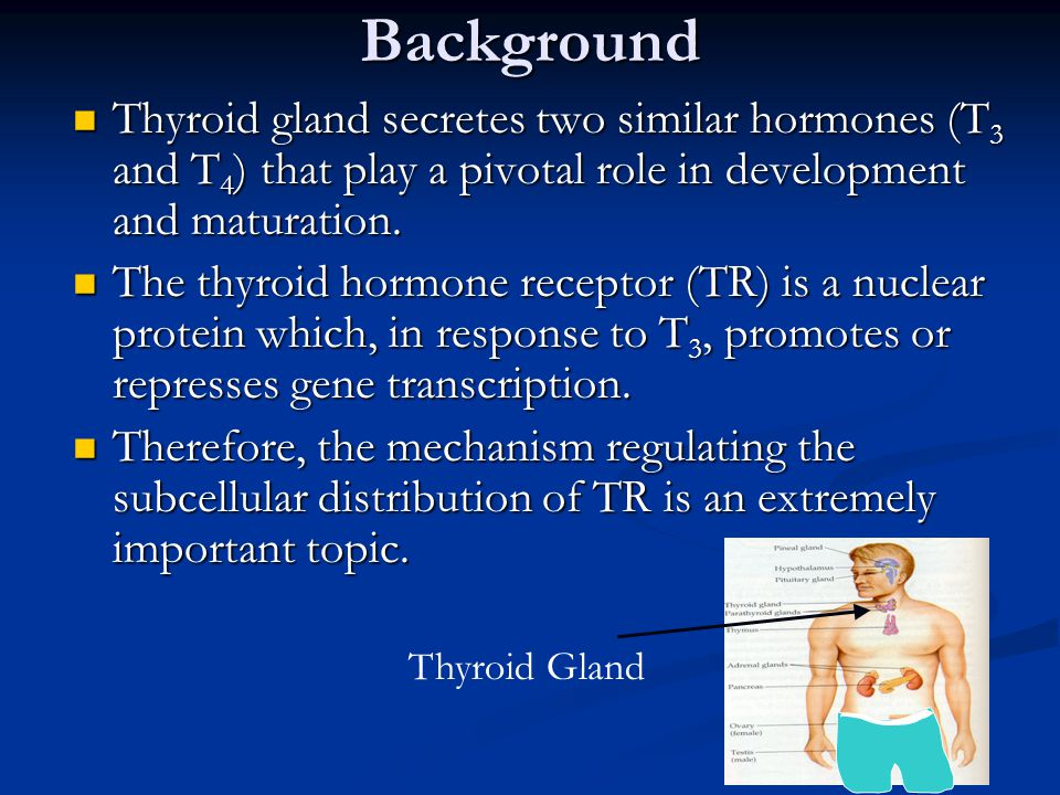 Thyroid gland secretes two similar hormones (T 3 and T 4 ) that play a pivotal role in development and maturation.