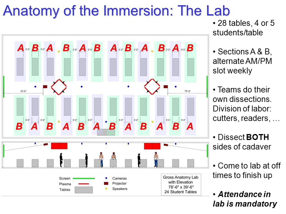 Anatomy of the Immersion: The Lab 28 tables, 4 or 5 students/table Sections A & B, alternate AM/PM slot weekly Teams do their own dissections. Divisio