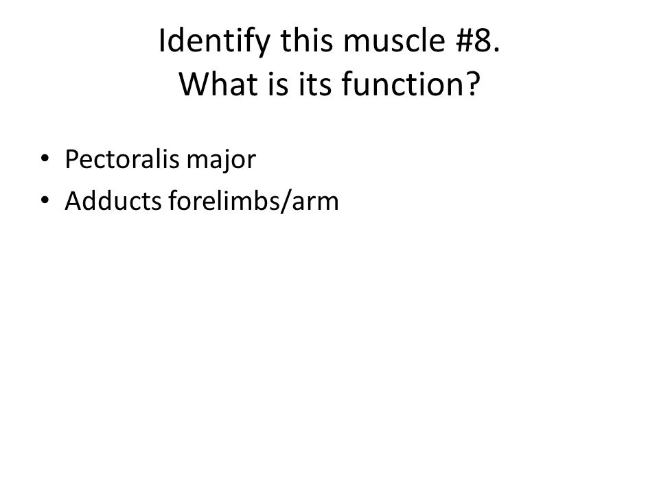 Pectoralis major Adducts forelimbs/arm