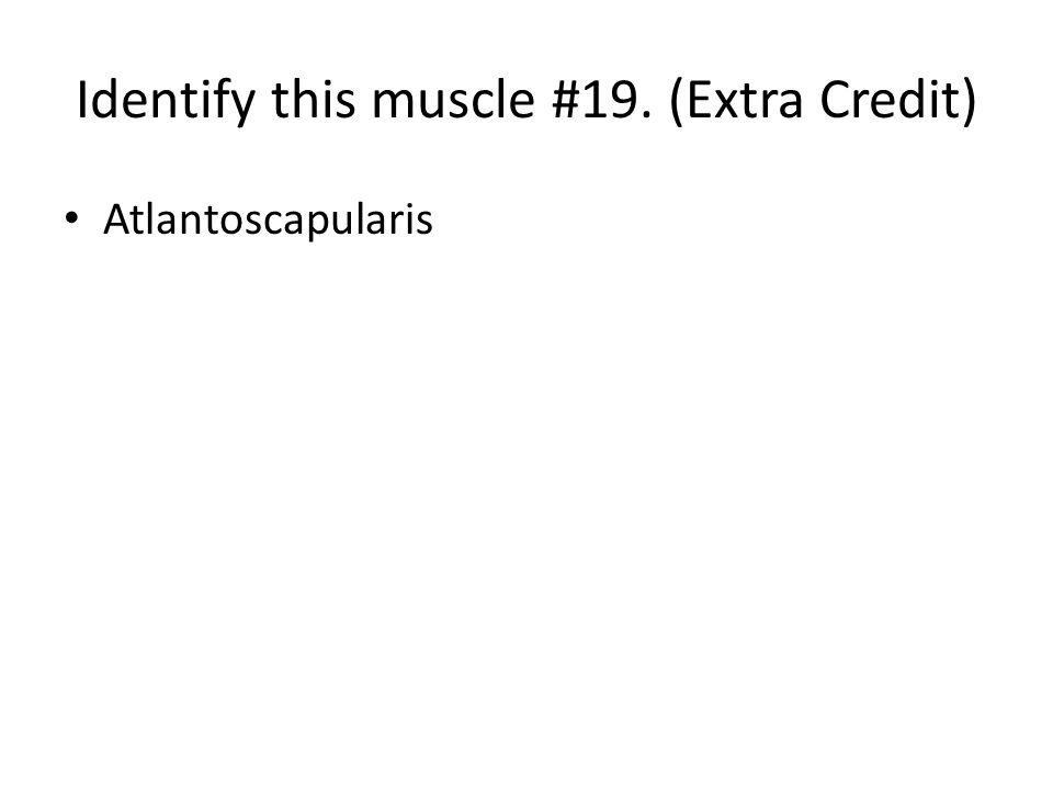 Atlantoscapularis