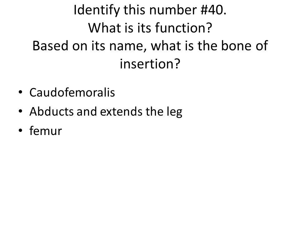 Caudofemoralis Abducts and extends the leg femur