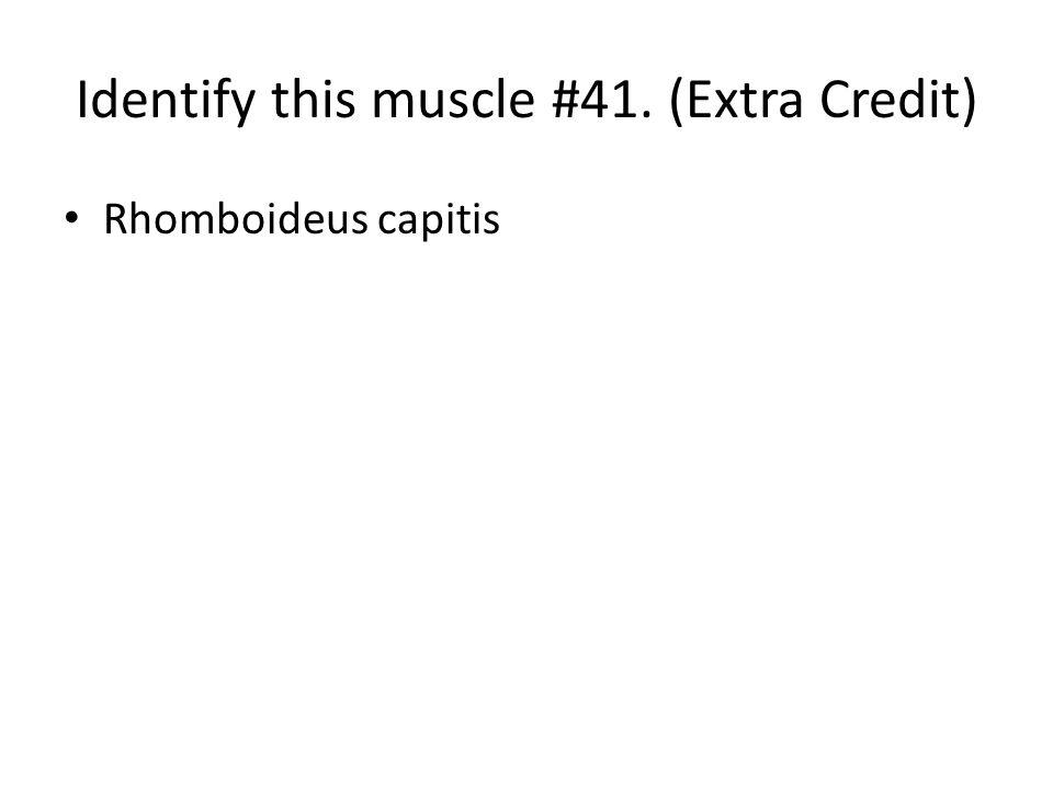 Rhomboideus capitis