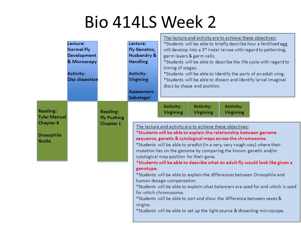 Bio 414LS Week 2 Lecture: Normal Fly Development & Microscopy Activity: Disc dissection Lecture: Fly Genetics, Husbandry & Handling Activity: Virgining Assessment: Sabotage.