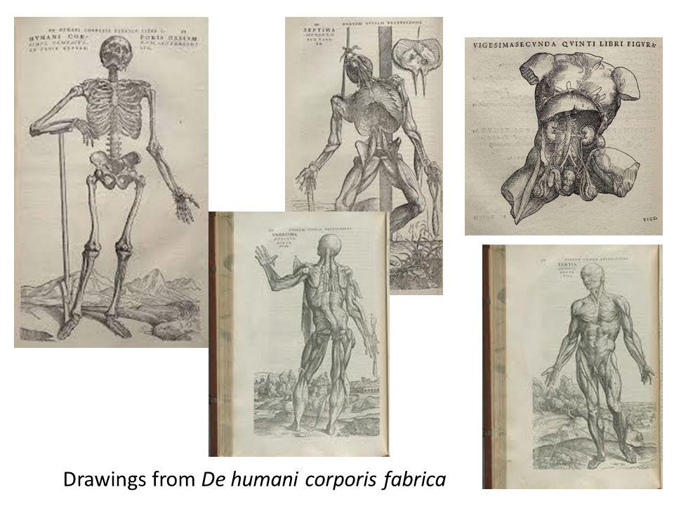 Drawings from De humani corporis fabrica