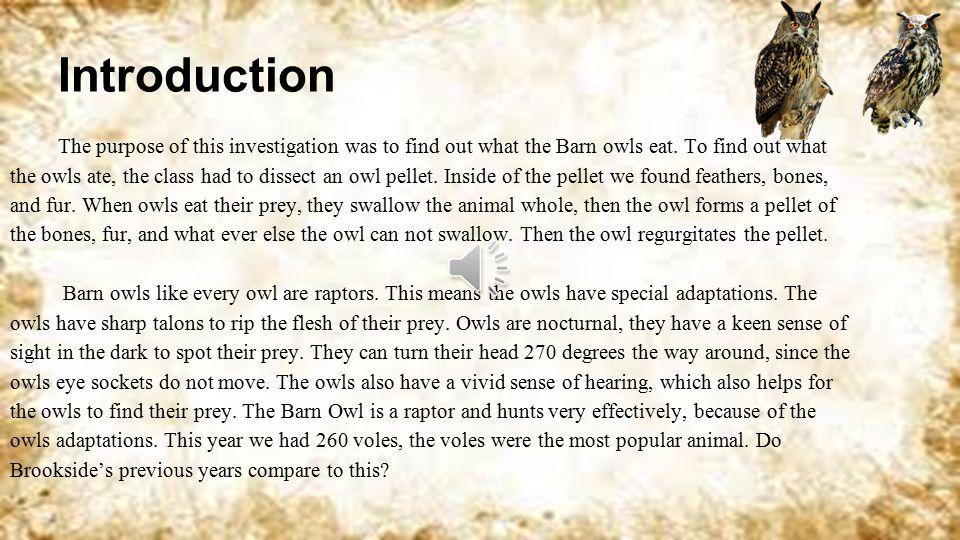 Owl Pellet Investigation By: Paige Gottlieb Period 7 Code: 12