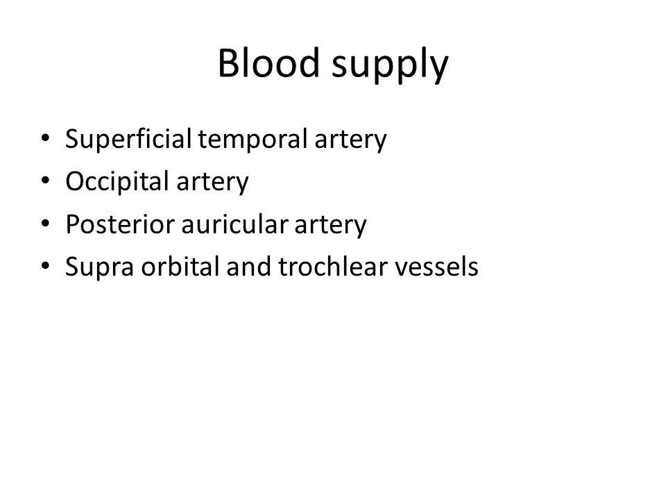 Blood supply Superficial temporal artery Occipital artery Posterior auricular artery Supra orbital and trochlear vessels