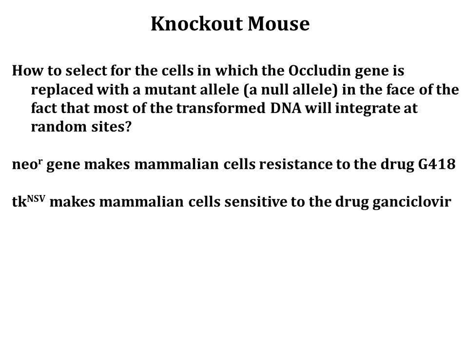 How to select for the cells in which the Occludin gene is replaced with a mutant allele (a null allele) in the face of the fact that most of the trans