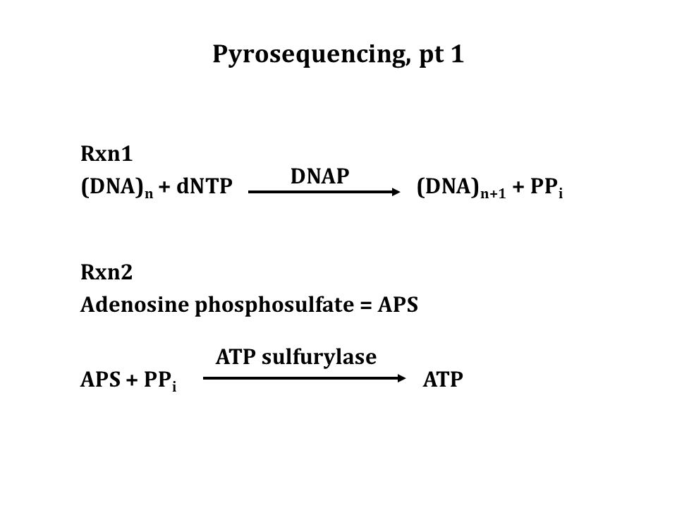 Pyrosequencing, pt 1 Rxn2 Adenosine phosphosulfate = APS APS + PP i ATP Rxn1 (DNA) n + dNTP (DNA) n+1 + PP i ATP sulfurylase DNAP