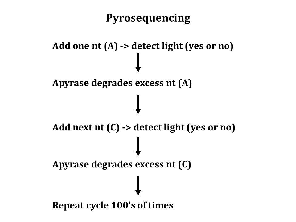 Pyrosequencing Add one nt (A) -> detect light (yes or no) Apyrase degrades excess nt (A) Add next nt (C) -> detect light (yes or no) Apyrase degrades excess nt (C) Repeat cycle 100's of times
