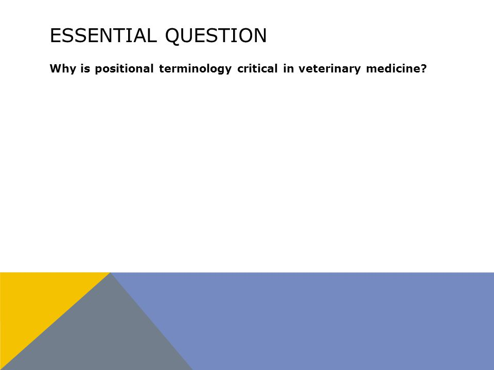 ESSENTIAL QUESTION Why is positional terminology critical in veterinary medicine?