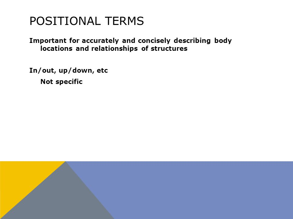 POSITIONAL TERMS Important for accurately and concisely describing body locations and relationships of structures In/out, up/down, etc Not specific