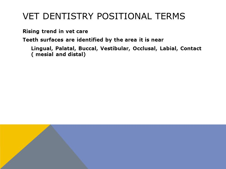 VET DENTISTRY POSITIONAL TERMS Rising trend in vet care Teeth surfaces are identified by the area it is near Lingual, Palatal, Buccal, Vestibular, Occlusal, Labial, Contact ( mesial and distal)
