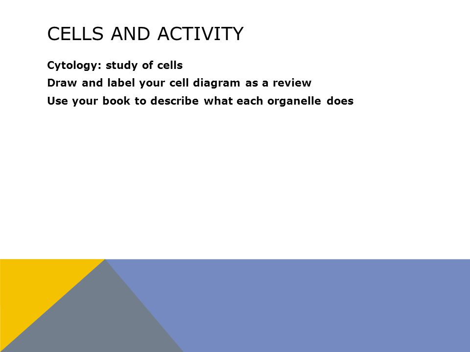 CELLS AND ACTIVITY Cytology: study of cells Draw and label your cell diagram as a review Use your book to describe what each organelle does