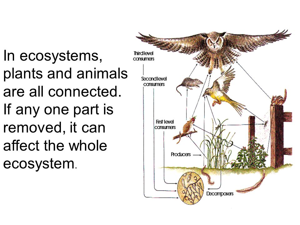 In ecosystems, plants and animals are all connected.