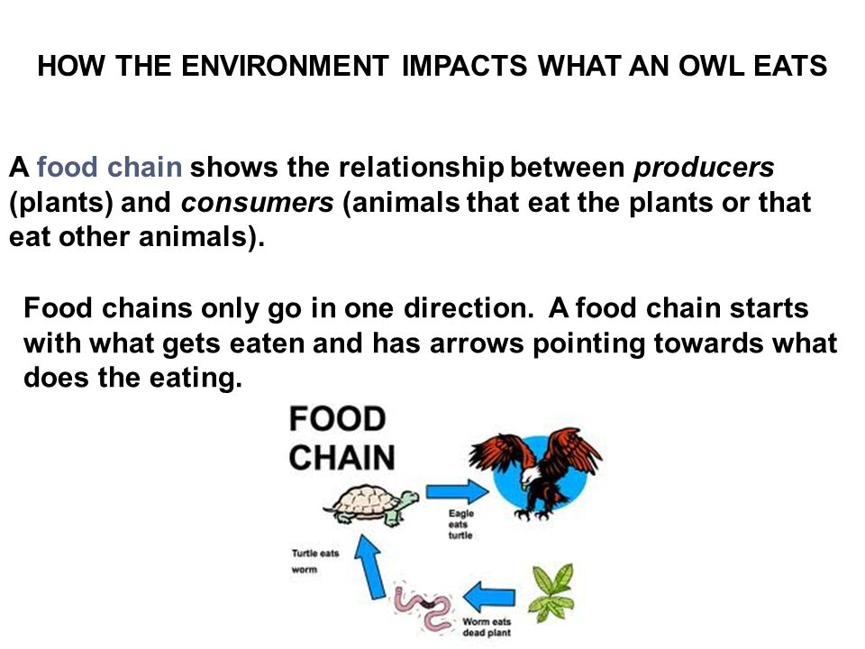 A food chain shows the relationship between producers (plants) and consumers (animals that eat the plants or that eat other animals).