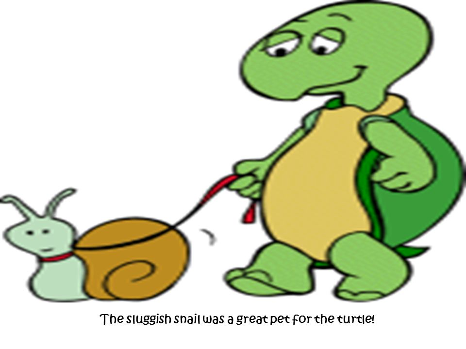 The sluggish snail was a great pet for the turtle!