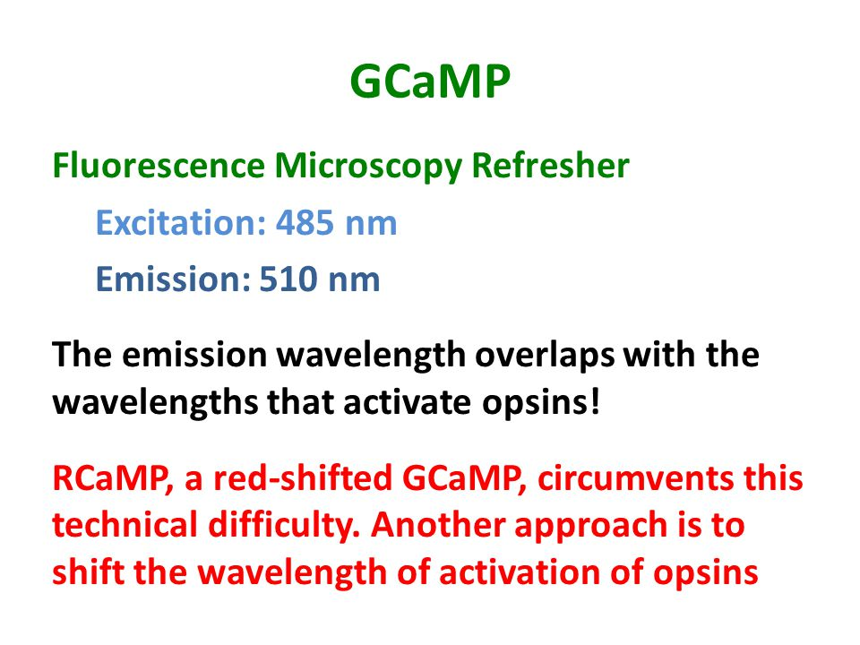 GCaMP Fluorescence Microscopy Refresher Excitation: 485 nm Emission: 510 nm The emission wavelength overlaps with the wavelengths that activate opsins.