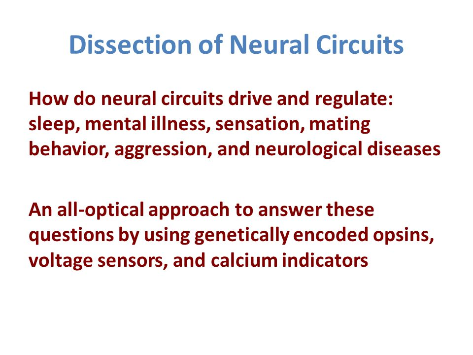 Dissection of Neural Circuits How do neural circuits drive and regulate: sleep, mental illness, sensation, mating behavior, aggression, and neurological diseases An all-optical approach to answer these questions by using genetically encoded opsins, voltage sensors, and calcium indicators