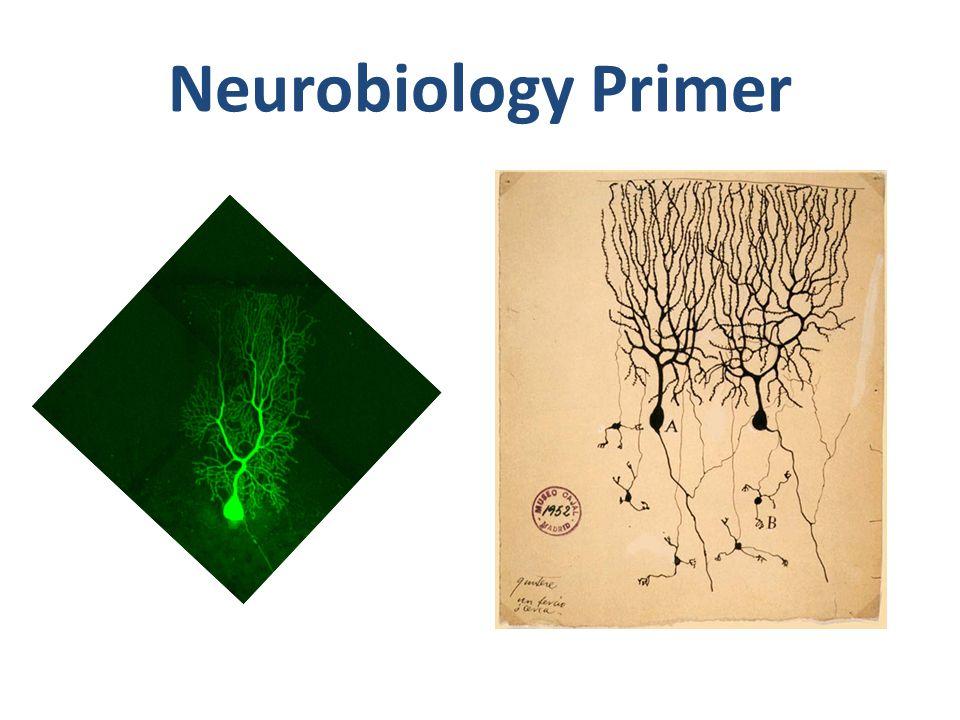 Neurobiology Primer