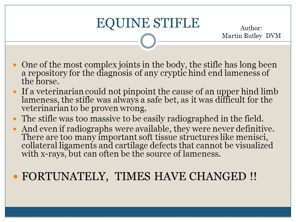 EQUINE STIFLE One of the most complex joints in the body, the stifle has long been a repository for the diagnosis of any cryptic hind end lameness of the horse.