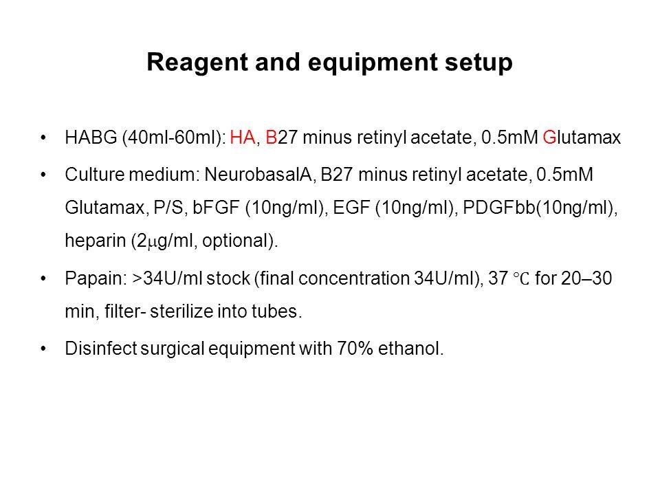 Reagent and equipment setup HABG (40ml-60ml): HA, B27 minus retinyl acetate, 0.5mM Glutamax Culture medium: NeurobasalA, B27 minus retinyl acetate, 0.5mM Glutamax, P/S, bFGF (10ng/ml), EGF (10ng/ml), PDGFbb(10ng/ml), heparin (2  g/ml, optional).
