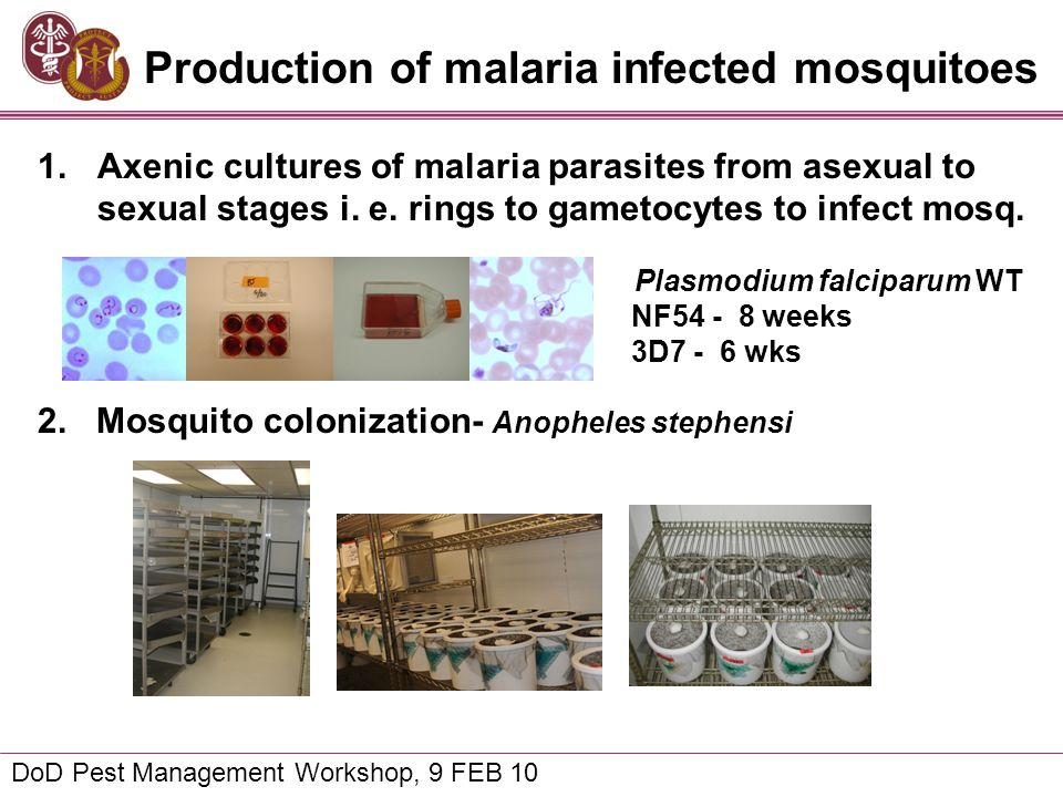 Production of malaria infected mosquitoes DoD Pest Management Workshop, 9 FEB 10 1.Axenic cultures of malaria parasites from asexual to sexual stages