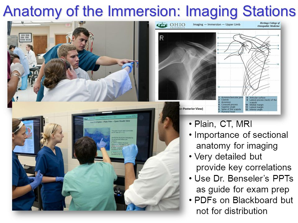 Anatomy of the Immersion: Imaging Stations Plain, CT, MRI Importance of sectional anatomy for imaging Very detailed but provide key correlations Use Dr.