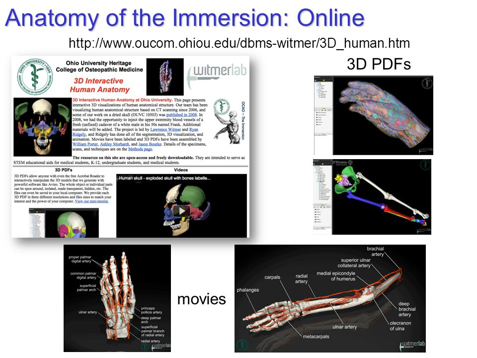Anatomy of the Immersion: Online http://www.oucom.ohiou.edu/dbms-witmer/3D_human.htm 3D PDFs movies
