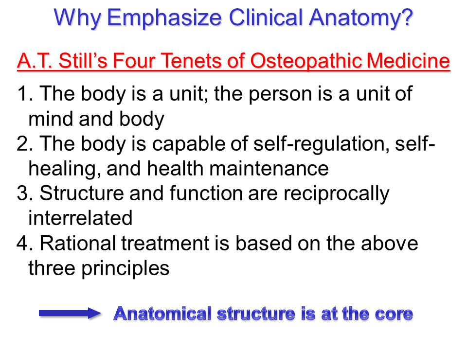 1. The body is a unit; the person is a unit of mind and body 2. The body is capable of self-regulation, self- healing, and health maintenance 3. Struc