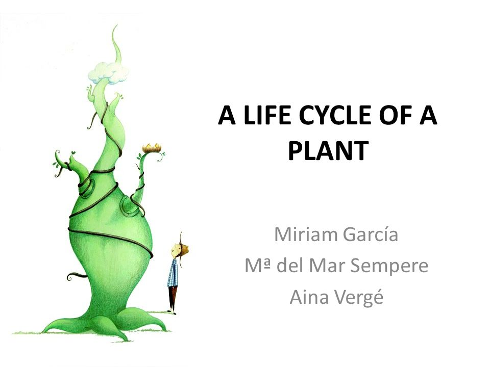 A LIFE CYCLE OF A PLANT Miriam García Mª del Mar Sempere Aina Vergé
