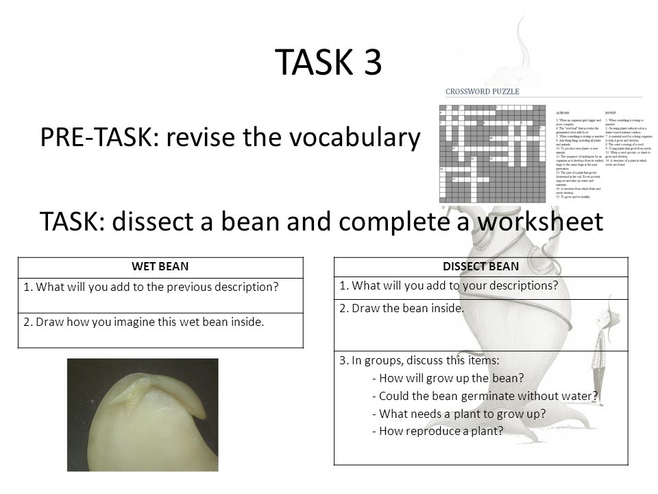 TASK 3 PRE-TASK: revise the vocabulary TASK: dissect a bean and complete a worksheet WET BEAN 1.