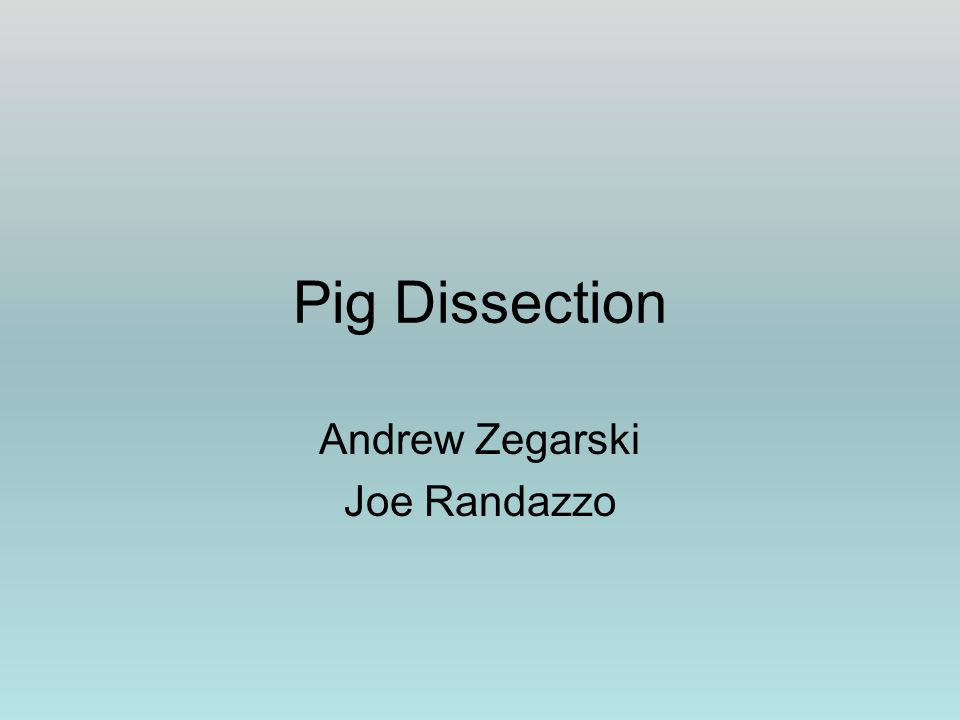 Pig Dissection Andrew Zegarski Joe Randazzo