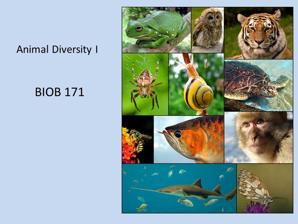 Animal Diversity I BIOB 171