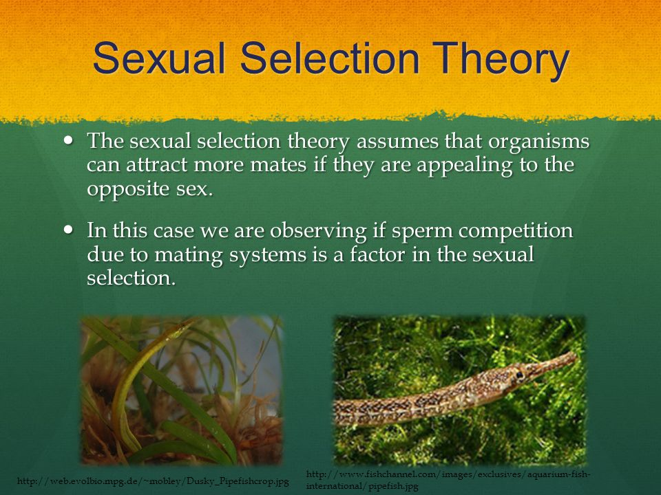 Sexual Selection Theory The sexual selection theory assumes that organisms can attract more mates if they are appealing to the opposite sex.