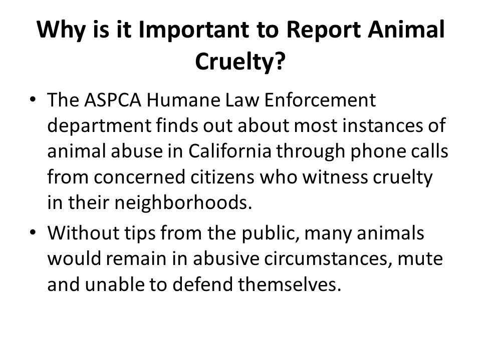 Why is it Important to Report Animal Cruelty.