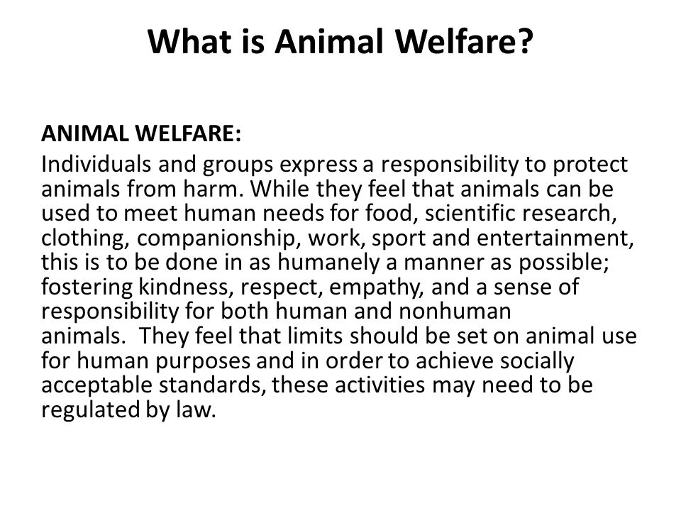 What is Animal Welfare.
