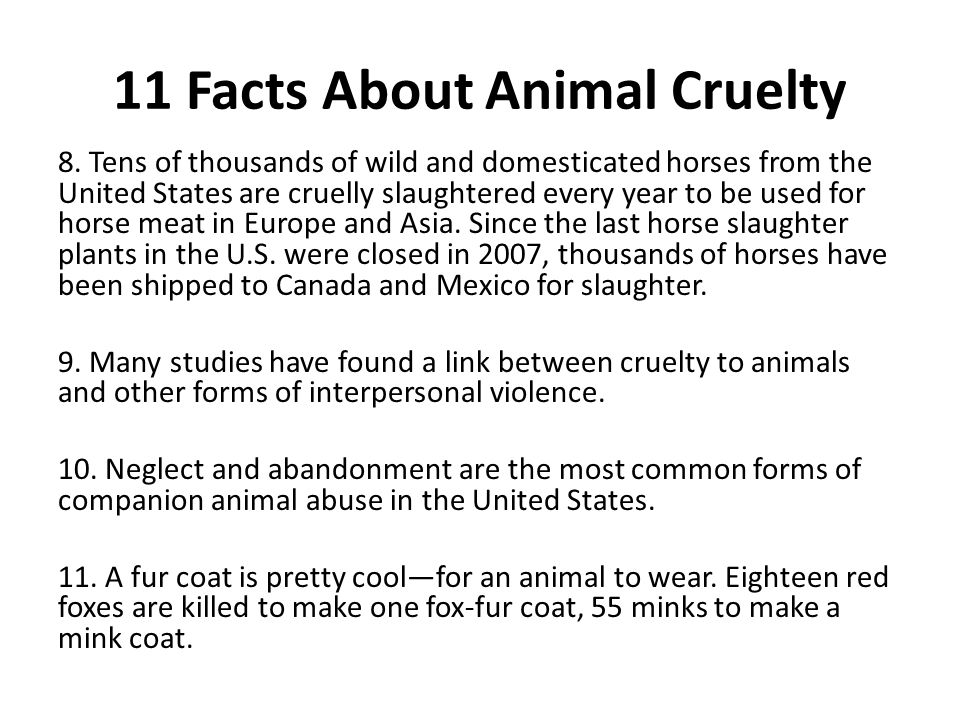 11 Facts About Animal Cruelty 8.