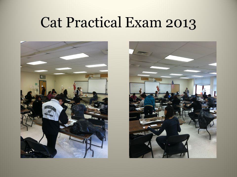 Cat Practical Exam 2013