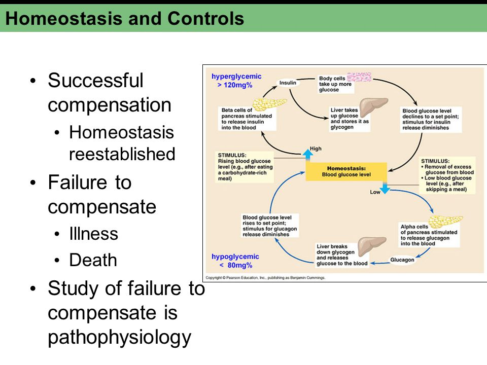 Organism in homeostasis External change Internal change results in loss of homeostasis Compensation succeedsCompensation fails WellnessIllness or disease Organism attempts to compensate Internal change Homeostasis and Controls Figure 1-4