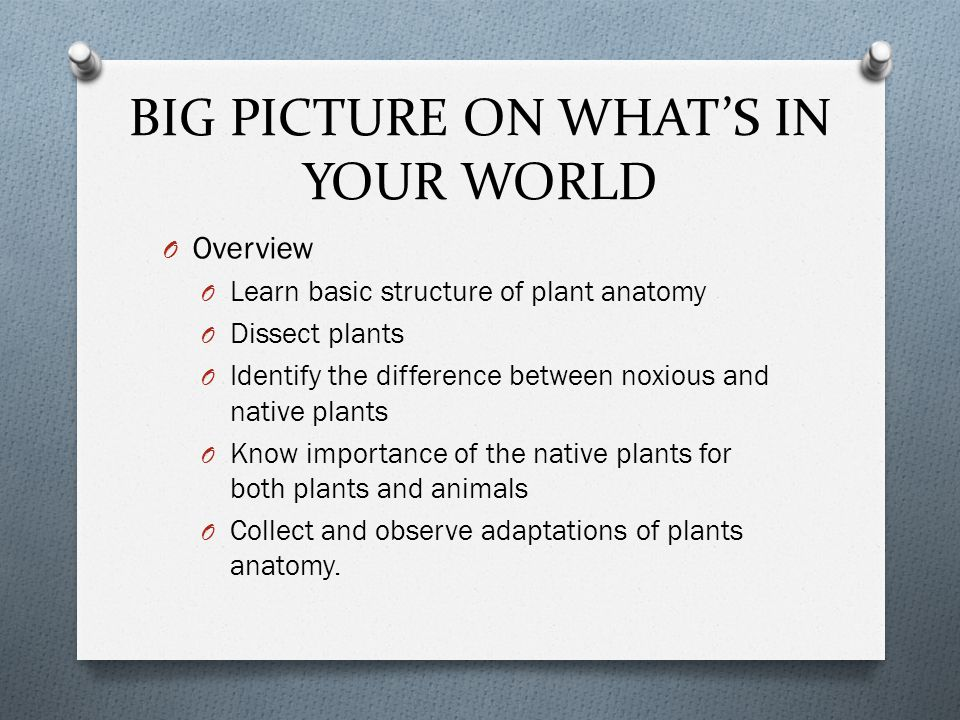 BIG PICTURE ON WHAT'S IN YOUR WORLD O Overview O Learn basic structure of plant anatomy O Dissect plants O Identify the difference between noxious and native plants O Know importance of the native plants for both plants and animals O Collect and observe adaptations of plants anatomy.