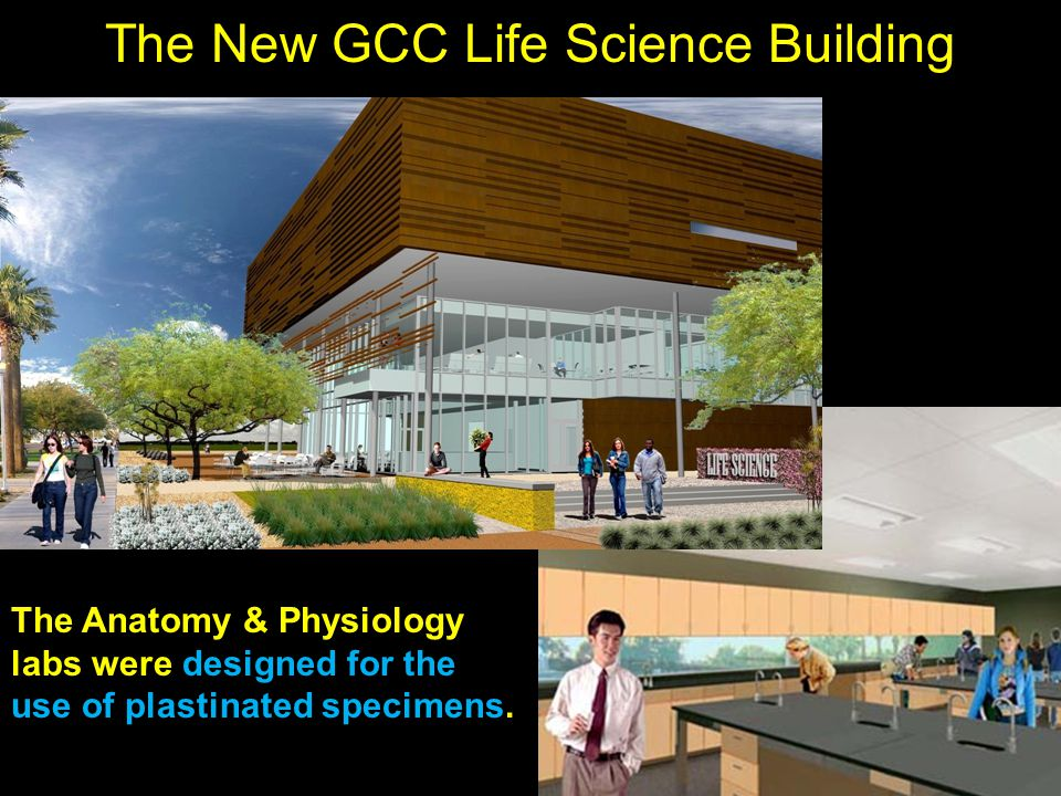 The New GCC Life Science Building The Anatomy & Physiology labs were designed for the use of plastinated specimens.