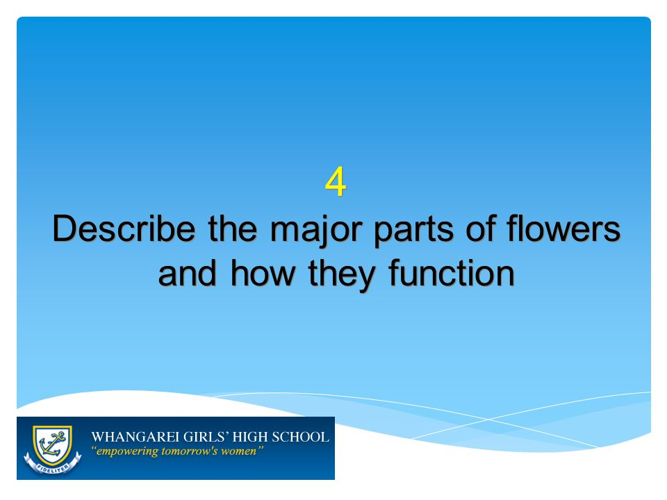 4 Describe the major parts of flowers and how they function 4 Describe the major parts of flowers and how they function