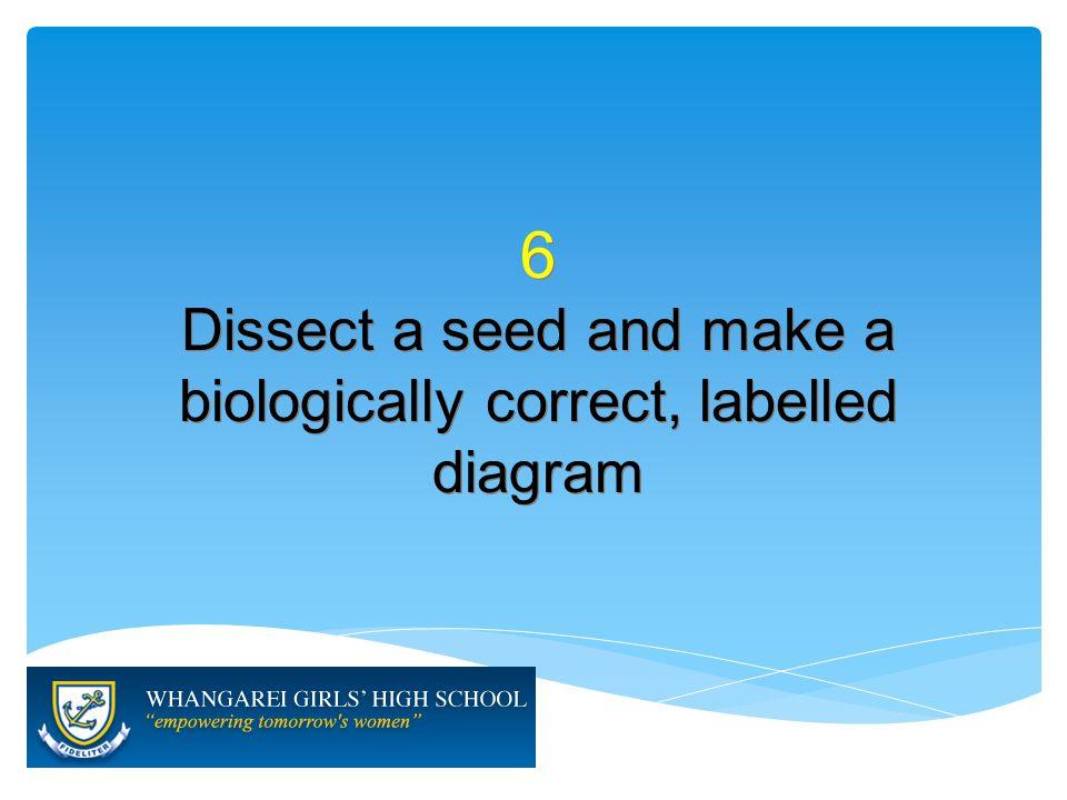 7 Describe the process of germination 7 Describe the process of germination