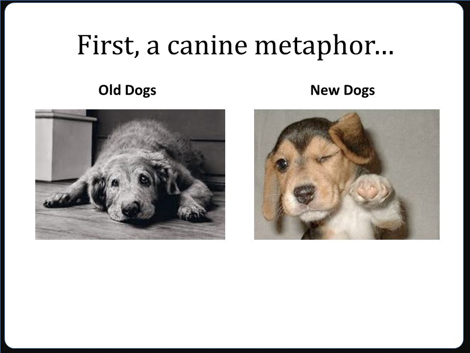 First, a canine metaphor… Old DogsNew Dogs