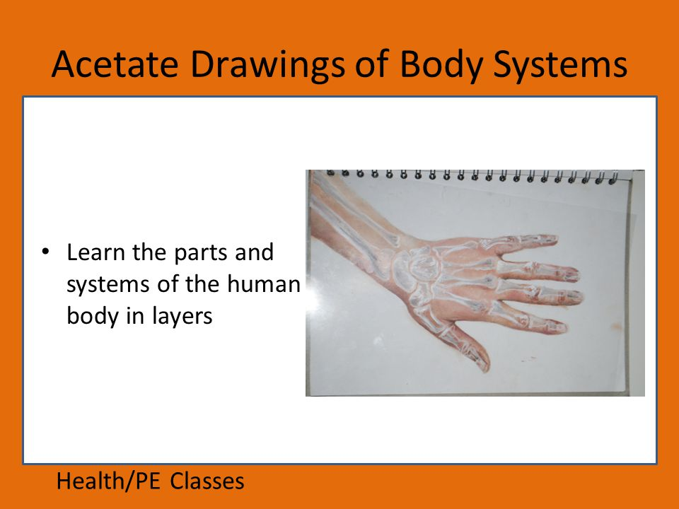 Acetate Drawings of Body Systems Learn the parts and systems of the human body in layers Health/PE Classes