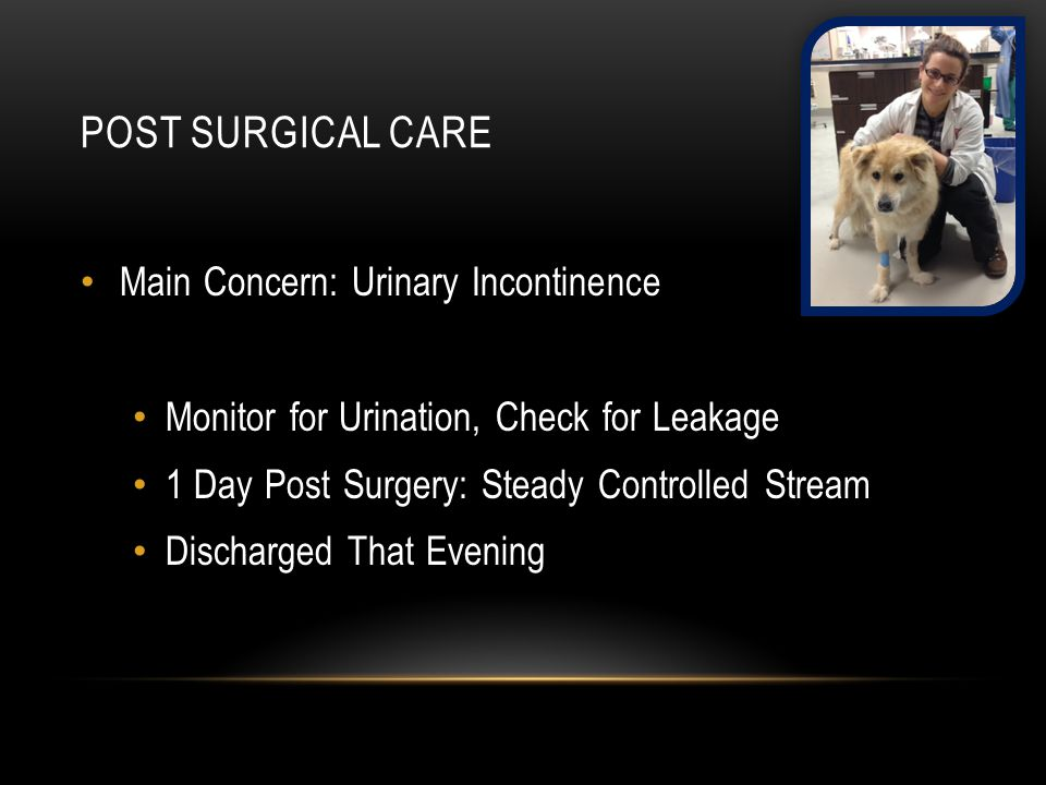 POST SURGICAL CARE Main Concern: Urinary Incontinence Monitor for Urination, Check for Leakage 1 Day Post Surgery: Steady Controlled Stream Discharged