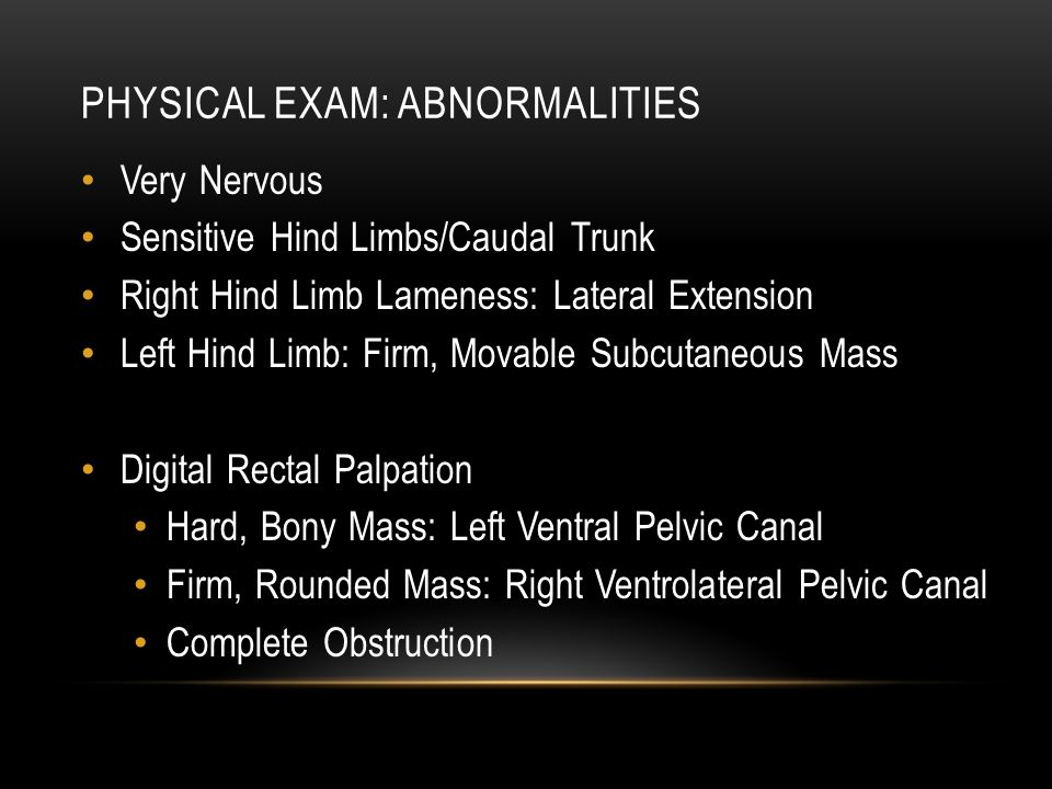 PHYSICAL EXAM: ABNORMALITIES Very Nervous Sensitive Hind Limbs/Caudal Trunk Right Hind Limb Lameness: Lateral Extension Left Hind Limb: Firm, Movable