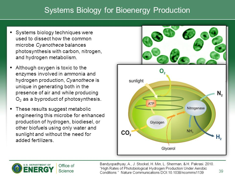 Systems Biology for Bioenergy Production  Systems biology techniques were used to dissect how the common microbe Cyanothece balances photosynthesis with carbon, nitrogen, and hydrogen metabolism.