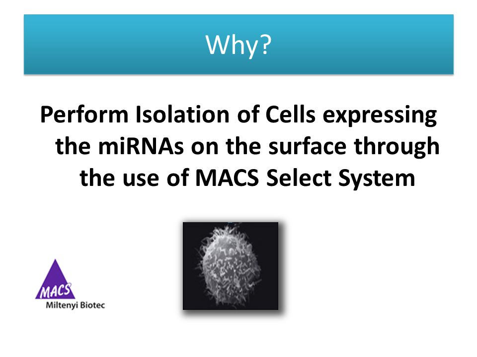 Why? Perform Isolation of Cells expressing the miRNAs on the surface through the use of MACS Select System