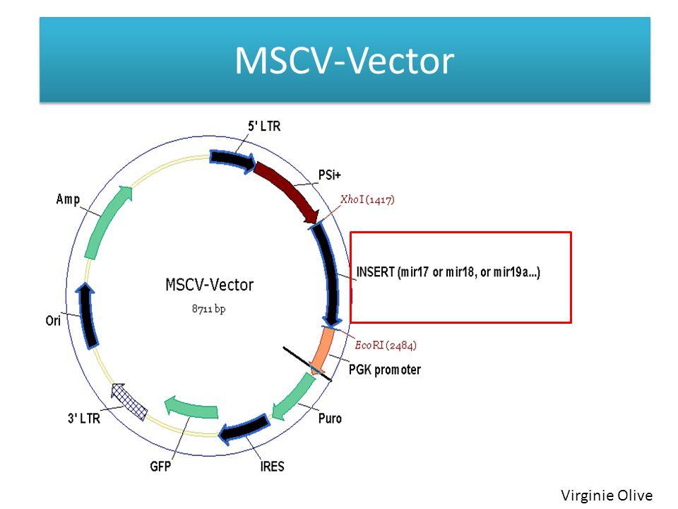 MSCV-Vector Virginie Olive